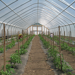 The view from inside one of our high tunnels